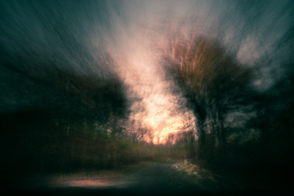abstract woodland scene